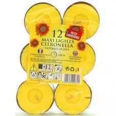 CF 12 MAXI TEALIGHTS CITRONELLA